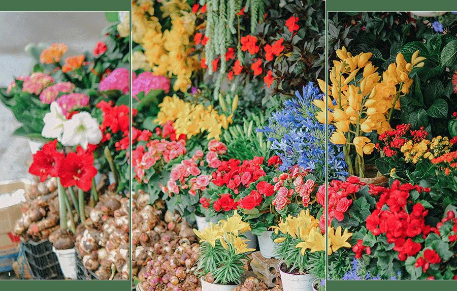profil-ria - florist